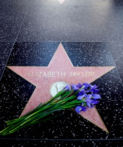 Elizabeth Taylor (1932-2011) Oscar-díjas amerikai-brit színésznő csillaga a Hollywoodi Hírességek sétányán Los Angelesben 2011. március 23-án, miután meghalt a színésznő