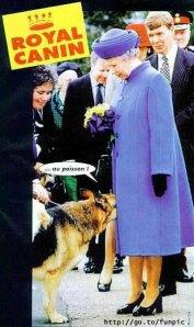 II. Erzsébet brit királynő találkozása egy németjuhásszal