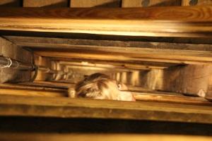 Ilyen hosszú lépcsőút vezetett le a wieliczkai sóbányába, Krakkó (Fotó: Mészáros Márton)
