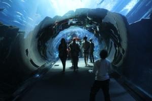 A hatalmas Dubai Akvárium, Dubaj, 2011 december (Fotó: Mészáros Márton)
