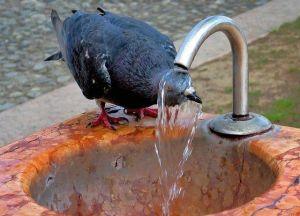 Nem csak az embert, az állatokat is megviseli a hőség