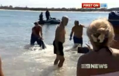 Két walesi turista visszatereli a nyílt vízbe a cápát az ausztráliai Queensland egyik strandján 2013. január 20-án