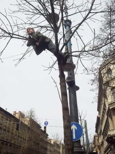 Mi fán terem a gyerek? (Fotó: Mészáros Márton, 2014.03.15)